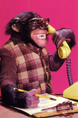 business-chimp