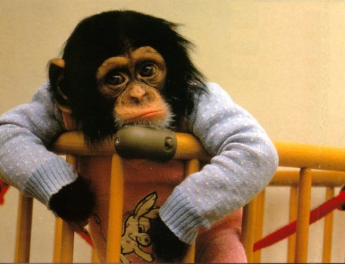 monkeysad