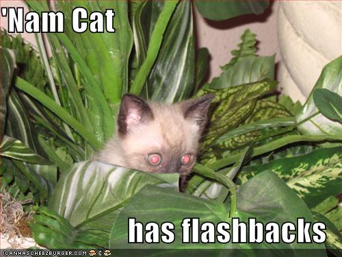 funny-picture-vietnam-cat-flashback