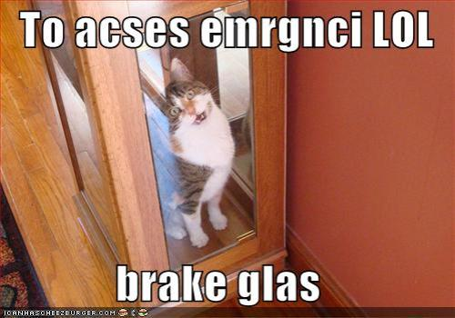 funny-pictures-emergency-lol-cat