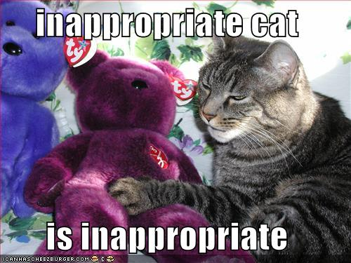 funny-pictures-inappropriate-cat-purple-bear1