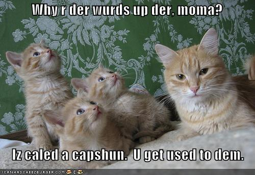 funny-pictures-mom-cat-teaches-kittens-about-captions