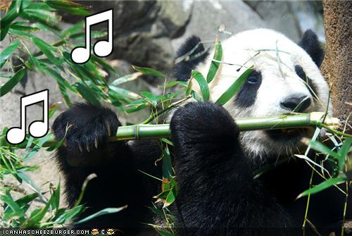 funny-pictures-panda-plays-the-flute