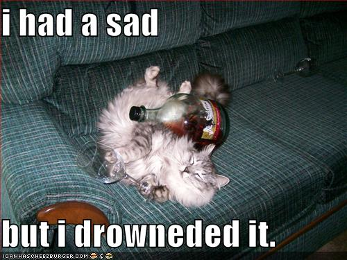 funny-pictures-passed-out-alcoholic-cat-couch-fluffy