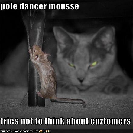 funny-pictures-pole-dancer-mouse-watching-cat