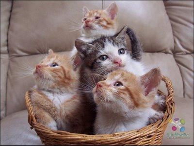 Children_Cat