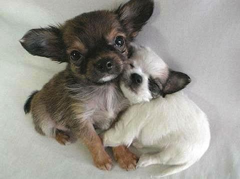 cute-animals001