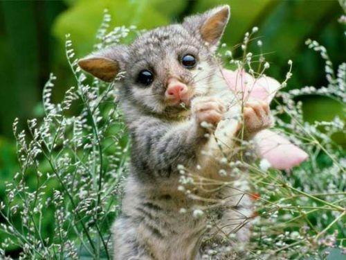cute-little-animals-01