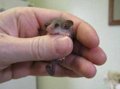 cute-tiny-animals01