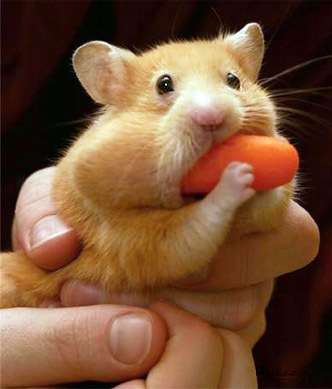 cute_animals6