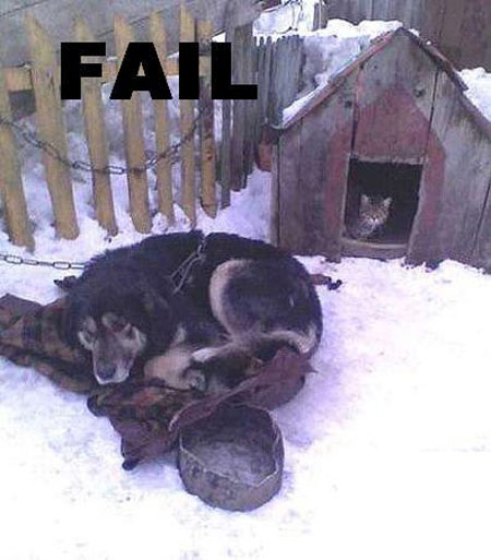 dog-house-fail