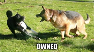 dogownedbydog