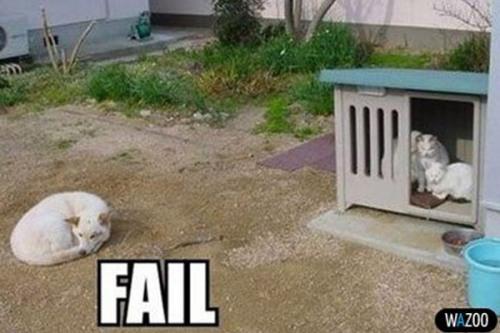 fail-dog-10-600x400