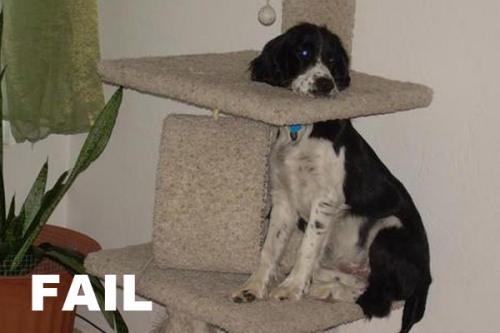 fail-dog-15-600x400