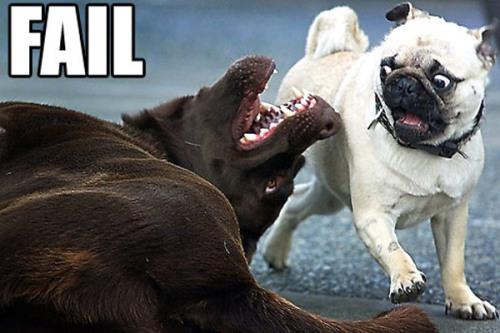 fail-dog-23-600x4002