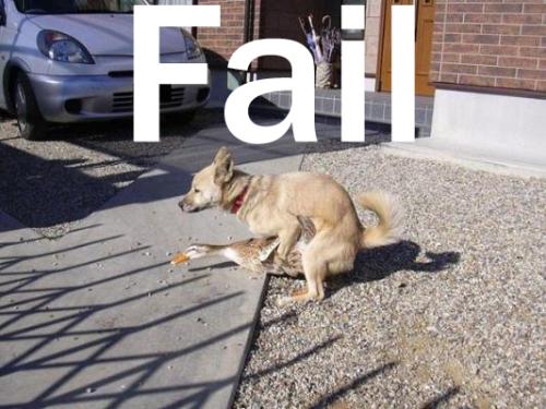 Fail-DogDuck.jpg