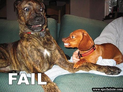 scary-dog-fail
