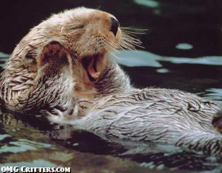 yawning-river-otter-cute-animal-pictures1